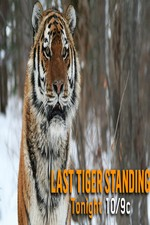 Discovery Channel-last Tiger Standing
